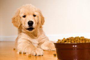 ingrédients alimentaires Puppy