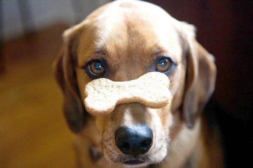 10 chiens recettes de biscuits pour votre animal de compagnie