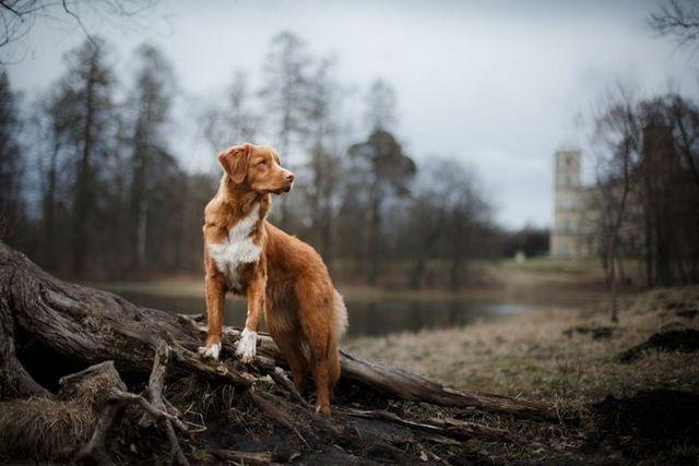 10 parcs nationaux Dog-friendly que vous avez visite dois