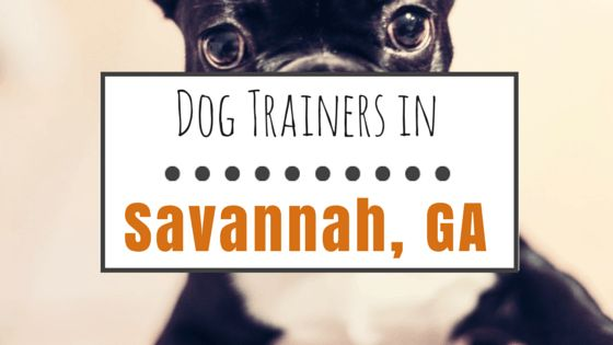 10 chiens formateurs dans la savane, ga la peine de vérifier