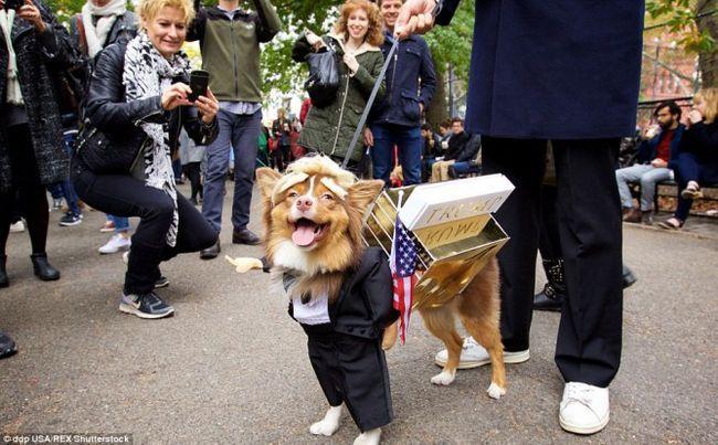 10 chiens habillés comme candidats présidentiels Donald Trump et hillary clinton!