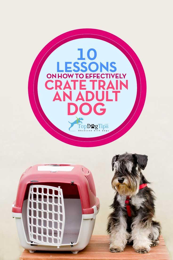 Meilleures leçons sur efficacement Crate Dog Training Adult
