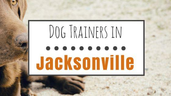 10 formateurs de chiens Réputés dans jacksonville, fl