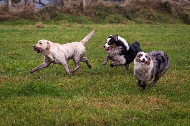 10 conseils pour garder la récréation amusant et sécuritaire de votre chien