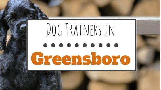 10 formateurs de chiens merveilleux dans greensboro, nc