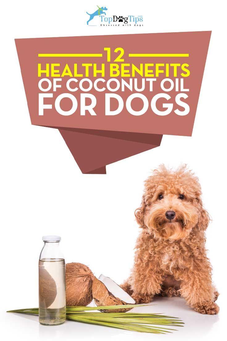 Les meilleurs avantages pour la santé de l`huile de coco pour les chiens