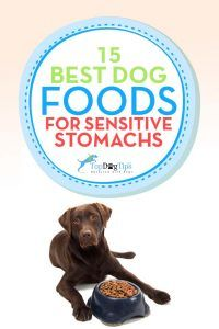 Meilleur Sensitive Stomach Dog Foods pour les maux d`estomac