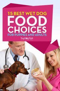 Meilleur Wet Dog Food pour chiots et chiens adultes