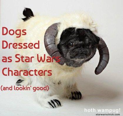 15 chiens habillés comme star wars caractères