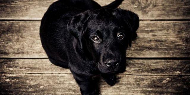 24 cas confirmés de parvovirus canin en courant continu
