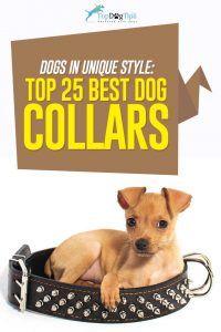 Meilleurs choix Colliers de chien mignon