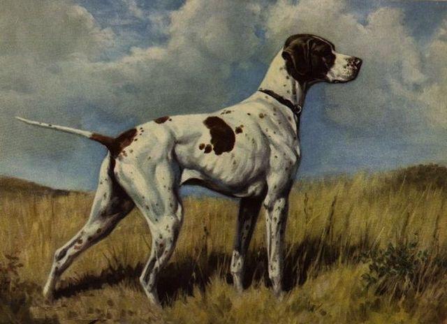 25 races de chiens Extinct vous saviez jamais existé