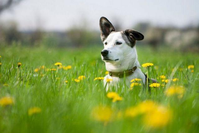 3 remèdes naturels pour les chiens: l`huile de coco, citrouille en conserve, la terre de diatomées
