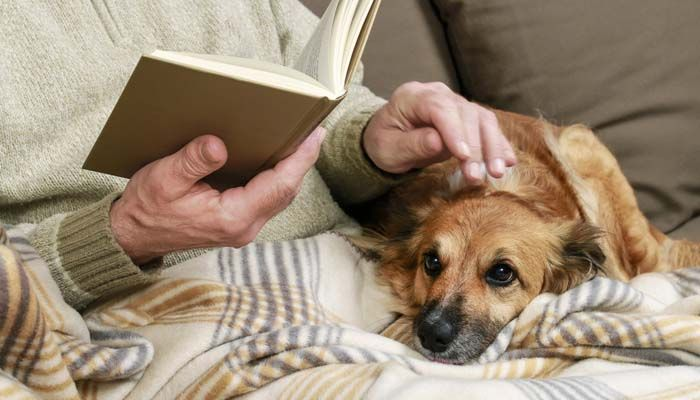 L`adoption de chiens plus âgés aimés
