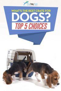 Meilleurs choix Crates pour chiens