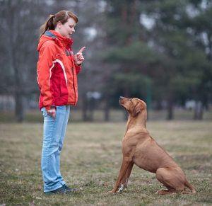 5 L`obéissance ordonne à tous les chiens ont besoin de savoir