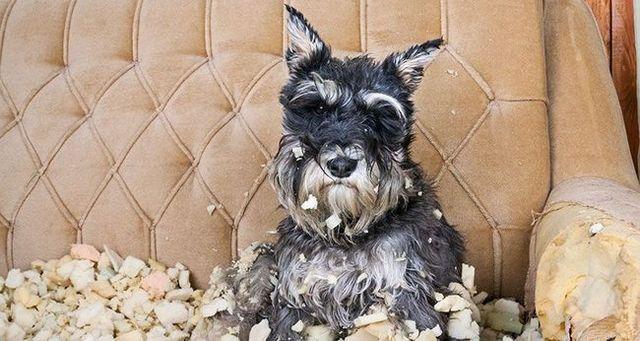 5 conseils pour aider le chien anxiété de séparation