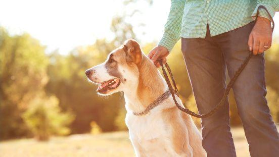 5 façons de construire une meilleure relation avec votre chien