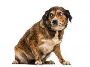 5 façons de prévenir les morsures de chien