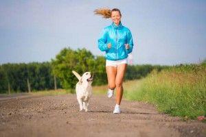 exercer chien à cesser d`aboyer