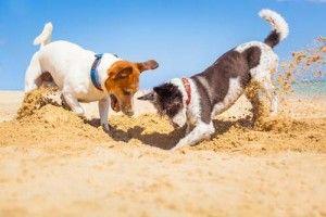la socialisation des chiens pour empêcher les aboiements