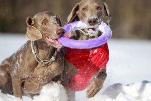 en utilisant des jouets pour chiens à calmer les chiens