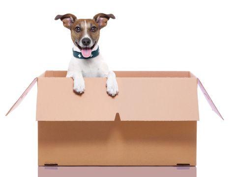 6 déductions fiscales liées Dog vous pourriez être admissible à la revendication