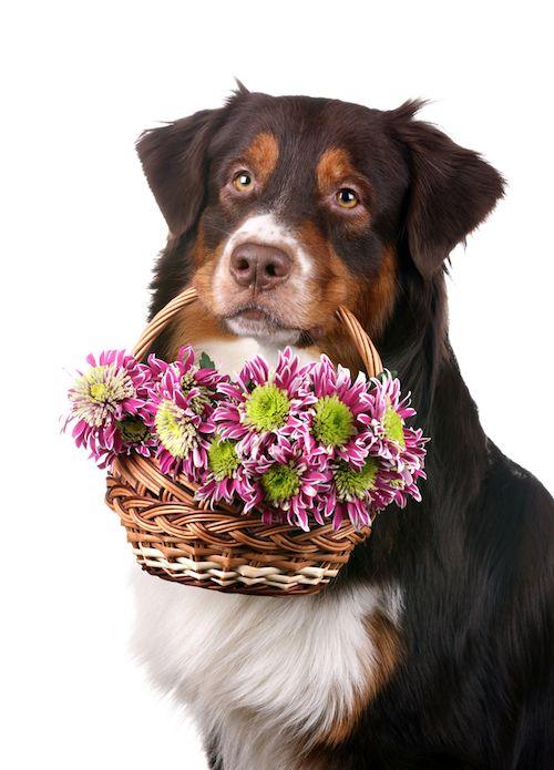 chien fille fleur
