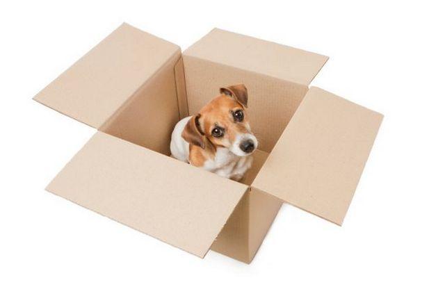 6 Questions vos animaux demandent lors d`un déménagement