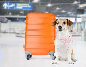 Aéroport de chien