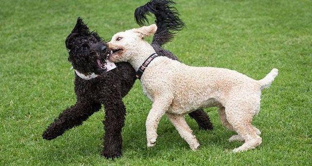 6 étapes pour gérer la surexcitation d`un chien
