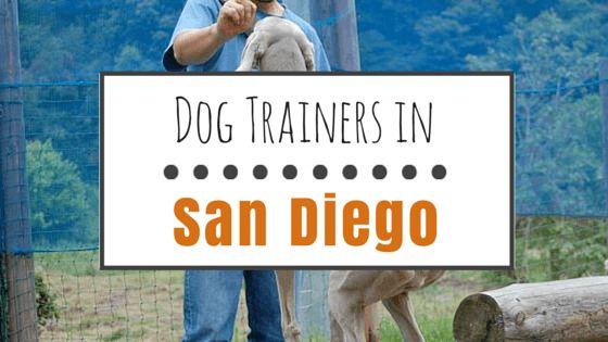 6 Top dresseurs de chiens à san diego