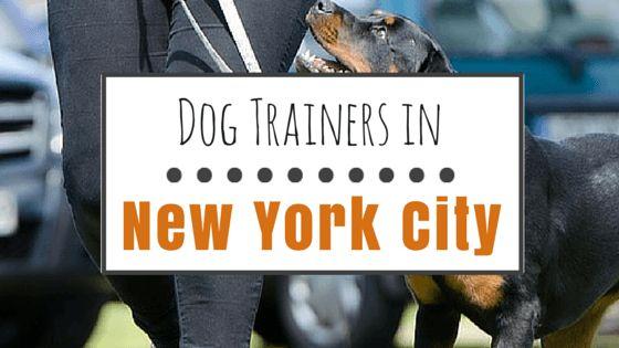 6 formateurs Haut-de-classe chiens à nyc