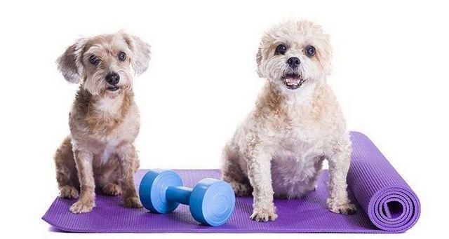 Chiens sur des tapis d`exercice
