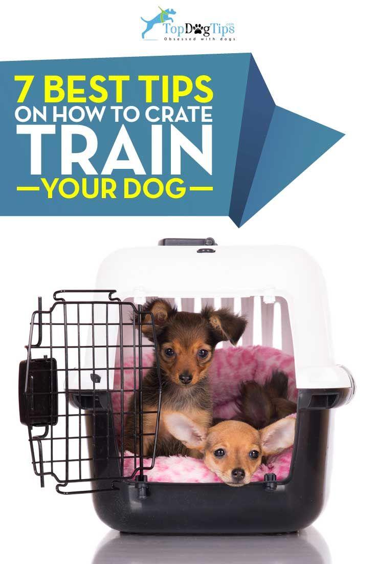 Conseils pour Crate formation de votre chien