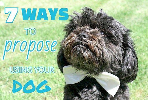 proposant avec votre chien