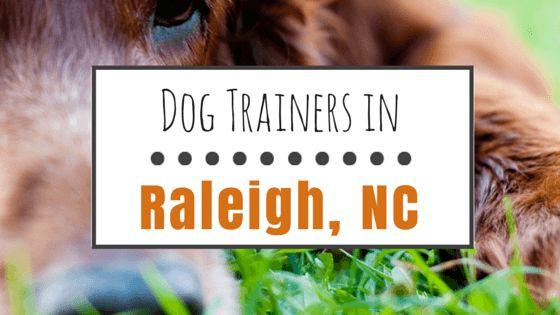 8 formateurs de chiens géniales à raleigh, nc
