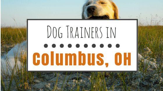 9 chiens formateurs en columbus, oh que nous recommandons