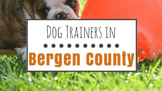 9 grandes options pour la formation de chien dans le comté de Bergen, nj