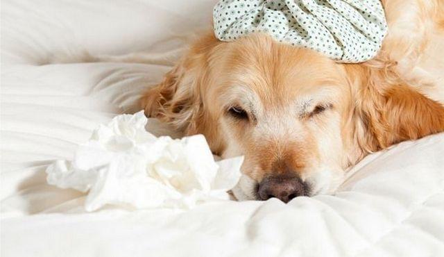 Une (première) Situation charnue: comment gérer les salmonelles chez les chiens