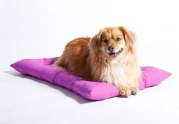 chien Brown pose sur lit pourpre.