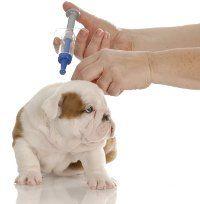 Vacciner un chiot