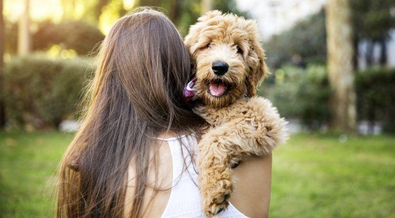 Allergie chiens libres: 5 races qui ne seront pas éternuer sur vous