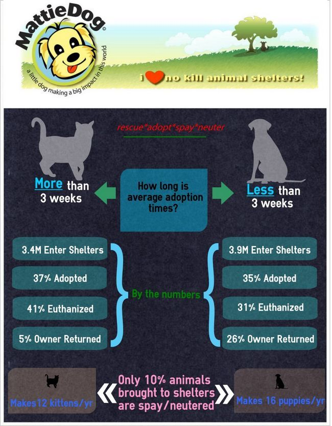 adoption animale chiffres infographique