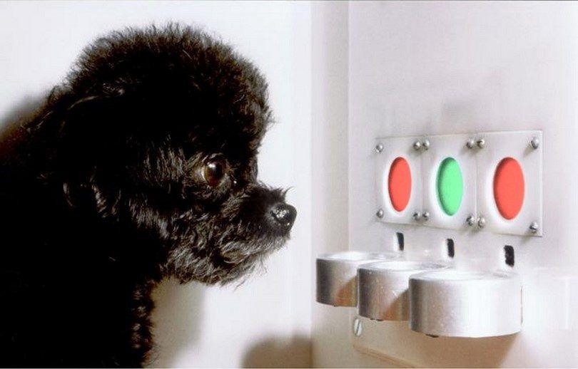 Les chiens sont daltoniens: la question qu`un chien pourrait répondre