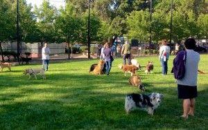 Arthrite Problème Sparks retraités Idea A Dog Park à Toledo, Ohio