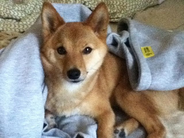 Source de l`image: Taro le Shiba Inu via Flickr