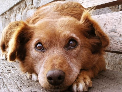 Demandez à l`entraîneur: renforcement de la confiance dans un chien craintif