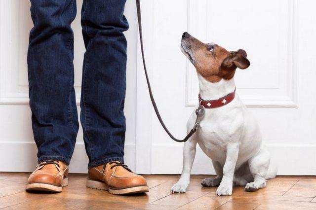 Demandez à l`entraîneur: la formation feuille de triche chien