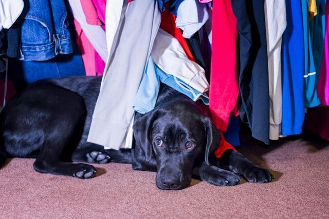 Pour aider votre chien à surmonter une peur d`orages, feux d`artifice, et d`autres bruits forts
